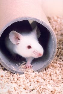 Durham University re-affirms commitment to openness in animal research